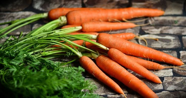 Liście marchewki