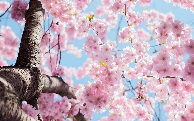 Przepis na wiosnę