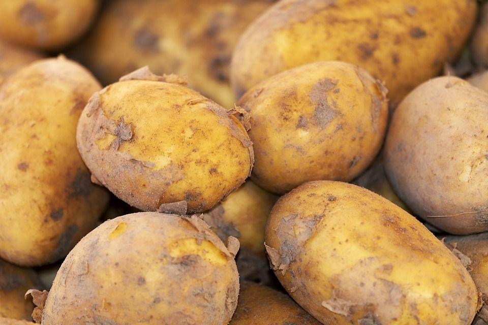 Jak należy przechowywać ziemniaki?